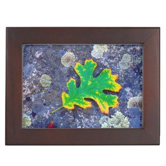 Oak Leaf and Acorns on a Lichen covered rock Keepsake Box