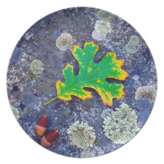 Oak Leaf and Acorns on a Lichen covered rock Plate