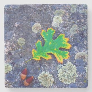 Oak Leaf and Acorns on a Lichen covered rock Stone Coaster