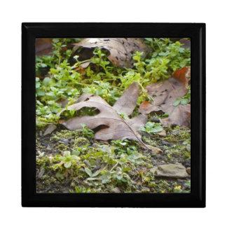 Oak Leaf and Chickweed Keepsake Boxes