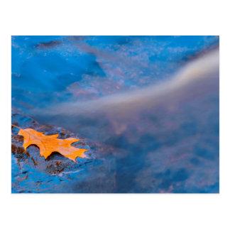 Oak leaf on rock in Rosseau River Post Card