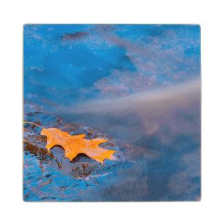 Oak leaf on rock in Rosseau River Wood Coaster