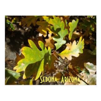 oak leaf, Sedona, Arizona Postcard