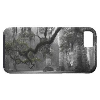 Oak Limb at the Old Sheldon Church iPhone 5 Cover