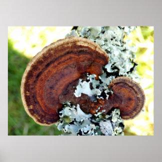 Oak Mazegill Fungus Poster