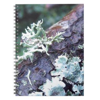 Oak Moss Lichen On Branch Notebook