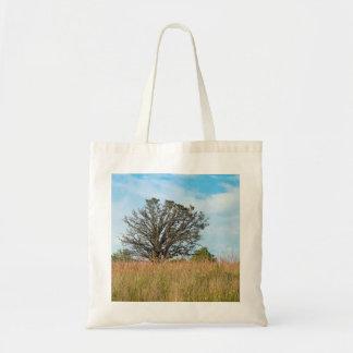 Oak Tree and Tall Grass Prairie