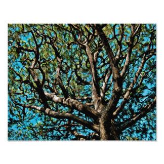 Oak Tree Art Photo
