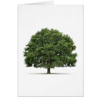 Oak Tree Cards
