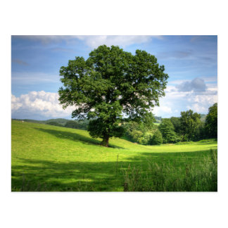 Oak tree green summer beautiful scenery postcard