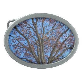 Oak Tree in a Blue Autumn Sky - Oval Belt Buckles