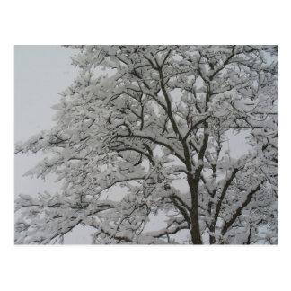Oak Tree in the Snow Postcard