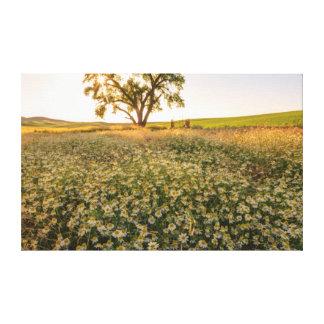 Oak Tree near field of Oxeye Daisies 1 Canvas Print