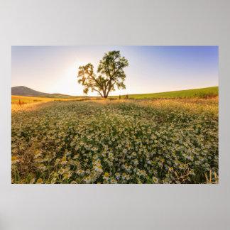 Oak Tree near field of Oxeye Daisies 1 Poster