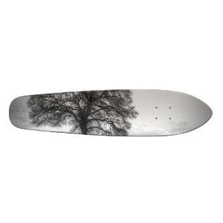 Oak Tree On A Hill Skateboard Deck