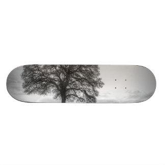 Oak Tree On A Hill Skateboards