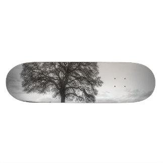 Oak Tree On A Hill Skate Boards