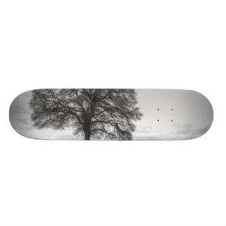 Oak Tree On A Hill Skate Deck
