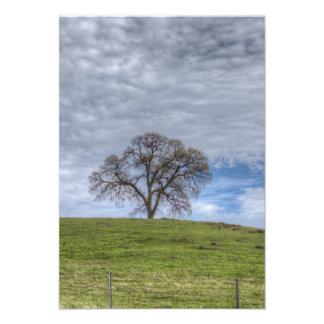 Oak Tree Solitaire Custom Invite