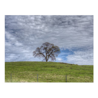 Oak Tree Solitaire Post Card
