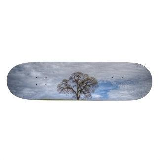 Oak Tree Solitaire Skateboards