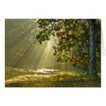 Oak Tree with Morning Sunbeams Greeting Card