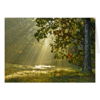 Oak Tree with Morning Sunbeams Nature Photography Card