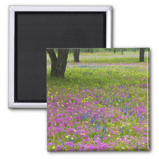 Oak Trees with field of Phlox, Blue Bonnets Square Magnet