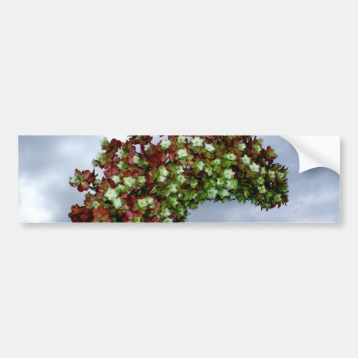 Oakleaf Hydrangea Bloom Bumper Stickers