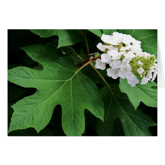 """oakleaf hydrangea"" by Larry Coressel Card"