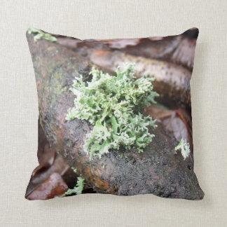Oakmoss Lichen On Fallen Tree Branch Cushions