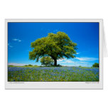 Oaks and Bluebonnets - Texas Greeting Card