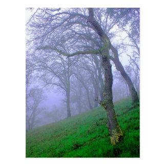 Oaks in the Mist Postcard