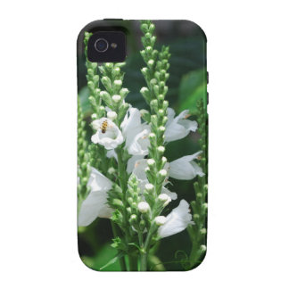 Obedient Plant iPhone 4/4S Covers