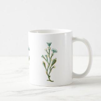 Obelia (Jellyfish) Coffee Mug