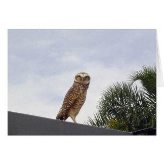 Observant Owl v2 Card