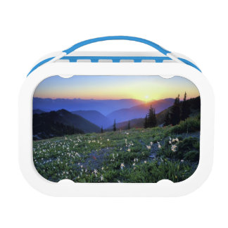 Obstruciton Point Sunset, Olympic NP, WA, USA Lunch Box