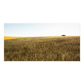 Ocaso in the Field Picture Card