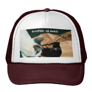 Occupied, Go Away! Funny Cats Mesh Hats