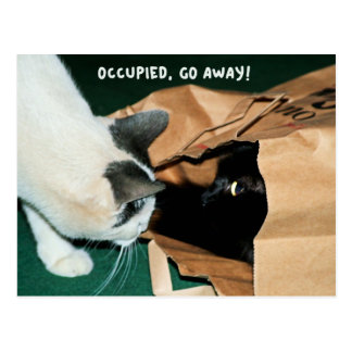 Occupied, Go Away! Funny Cats Postcard