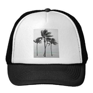 Ocean and Palms Cap