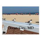 Ocean City Beach, MD with Birds Postcard