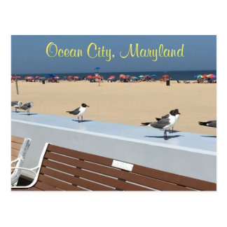 Ocean City Maryland Birds Postcard
