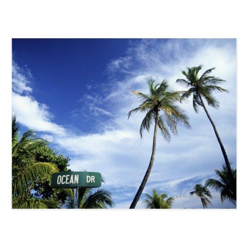 Ocean Drive' road sign, South Beach, Miami, Florid Postcard