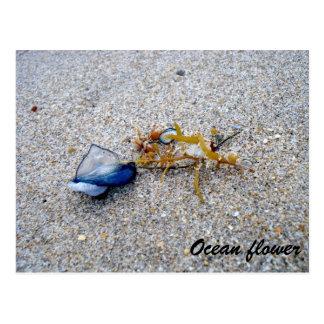Ocean flower postcard