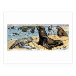 Ocean Mammals Postcards