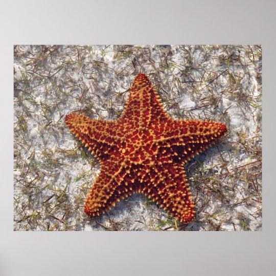 Ocean Starfish Poster