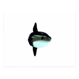 Ocean Sunfish - Mola Mola Postcard