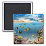 Ocean Underwater Coral Reef Tropical Fish Square Magnet