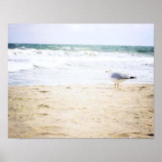 Ocean Waves Surf Beach Seagull Water Beach Poster